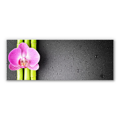 Wandbild Orchid and Bamboo - Panorama (horizontal)