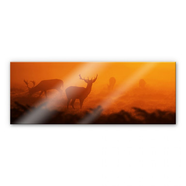 Acrylglasbild Hirsche im Sonnenuntergang - Panorama
