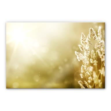 Acrylglasbild Sonniges Kornfeld
