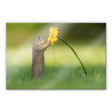 Acrylglasbild Duijn - Erdhörnchen hält Blume