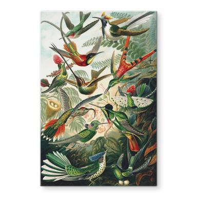 Glasbild Haeckel - Kolibris