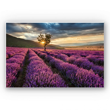Hartschaumbild Lavendelblüte in der Provence