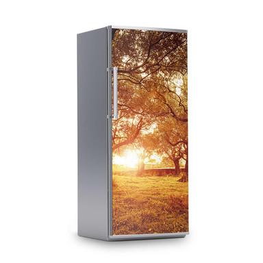 Kühlschrankfolie 60x150cm - Tree Sunlight- Bild 1