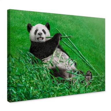 Leinwandbild Ben Heine - Glücklicher Panda
