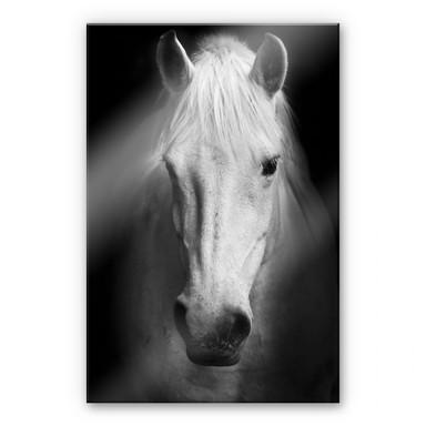 Acrylglasbild White Horse