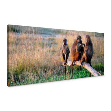 Leinwandbild Affenbande - Panorama