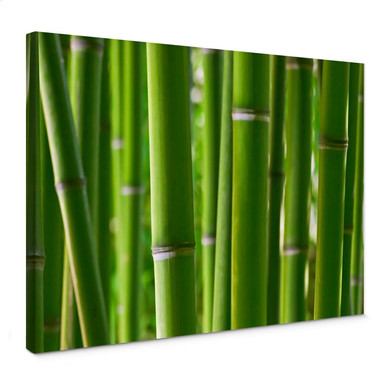 Leinwandbild Bambuswald