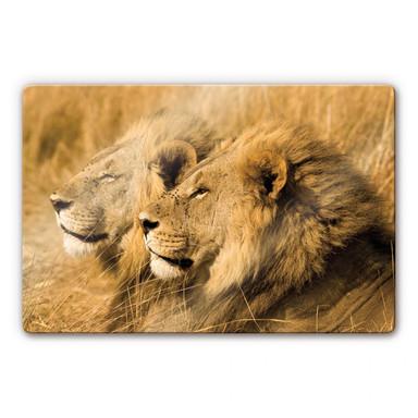 Glasbild NG Löwenpaar