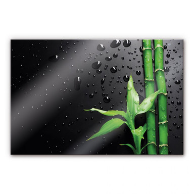 Acrylglasbild Bamboo Over Black