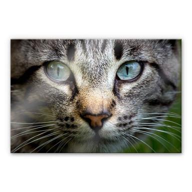Acrylglasbild Cuadrado - In your eyes
