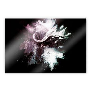 Acrylglasbild Hugonnard - Wild Explosion: Wasserbüffel