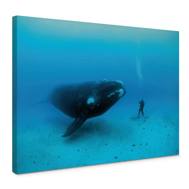 Leinwandbild NG Wal mit Taucher