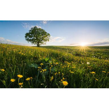 Fototapete Frühling auf dem Land