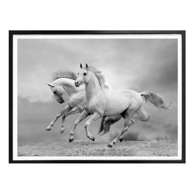 Poster Pferde im Galopp