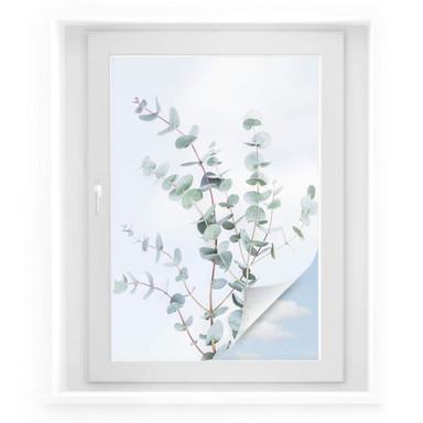 Sichtschutzfolie Sisi & Seb - Eukalyptuszweig