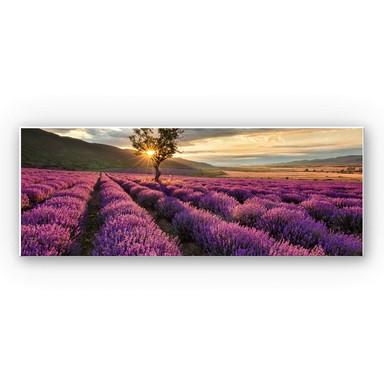 Hartschaumbild Lavendelblüte in der Provence - Panorama 01