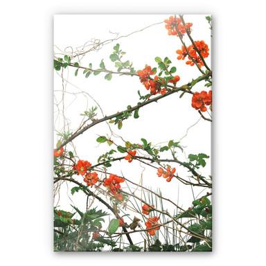 Acrylglasbild Kadam - Flora Quittenblüte