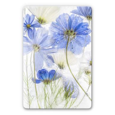 Glasbild Disher - Blue Frozen