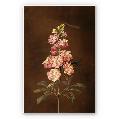 Hartschaumbild Dietzsch - Eine rosa Garten Levkkoje