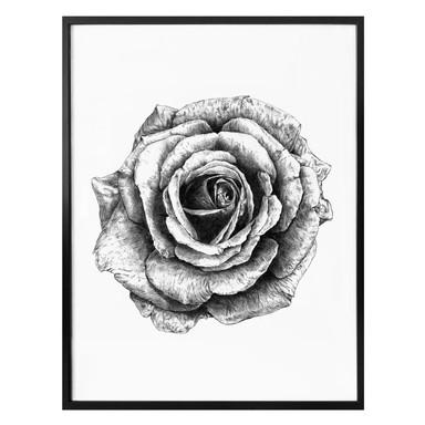Poster Kools - Rose