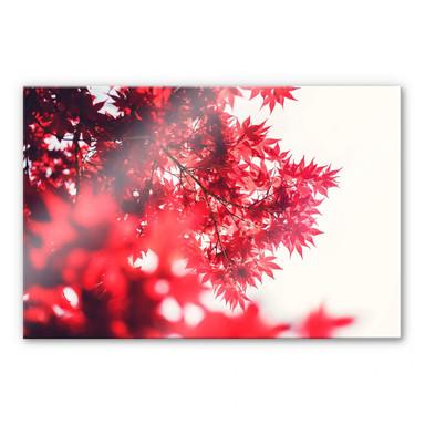 Acrylglasbild Ahornbaum im Herbst