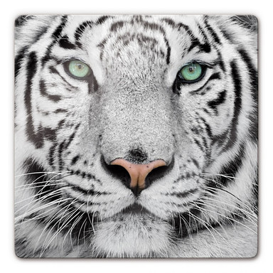 Glasbild Gorgeous Sumatran Tiger