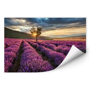 Wallprint Lavendelblüte in der Provence