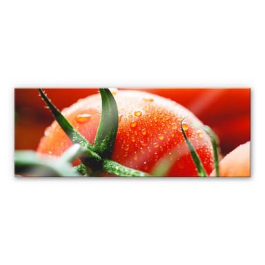 Acrylglasbild Fresh Tomato - Panorama