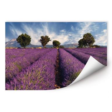 Wallprint Lavendelfeld