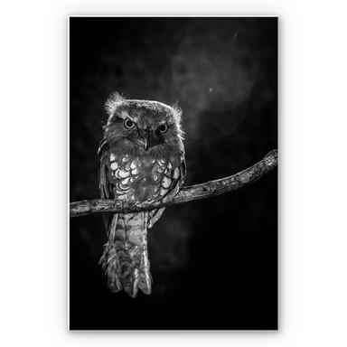 Wandbild Wilianto - Staring Owl