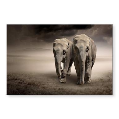 Acrylglasbild Die Elefanten
