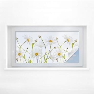 Sichtschutzfolie Disher - Ox eye Daisies - Panorama