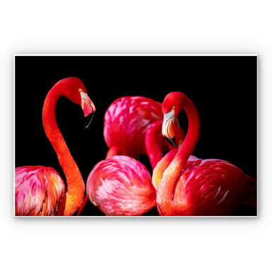 Wandbild Pink Flamingo