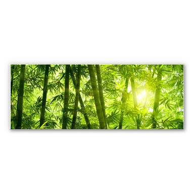 Wandbild Sonnenschein im Bambuswald - Panorama