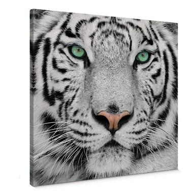 Leinwandbild Gorgeous Sumatran Tiger