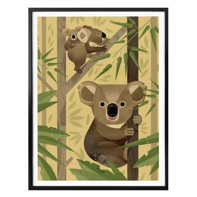Poster Braun - Koala