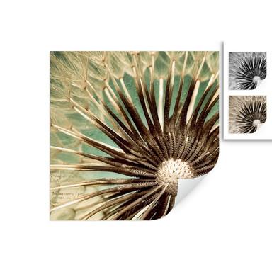 Wallprint Pusteblumen-Poesie - quadratisch