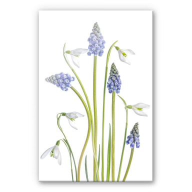 Acrylglasbild Disher - Frühjahrsblüher