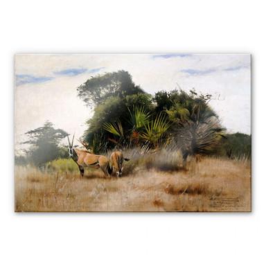 Acrylglasbild Kuhnert - Antilopen