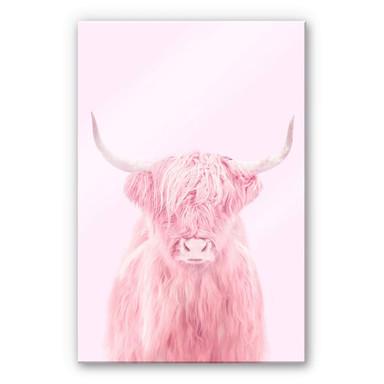 Acrylglasbild Fuentes - Highland Cow