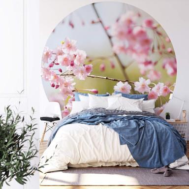 Fototapete Cherry Blossoms - Rund
