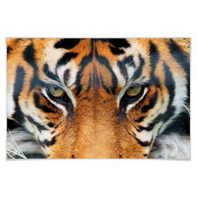 Giant Art® XXL-Poster Tiger - 175x115cm