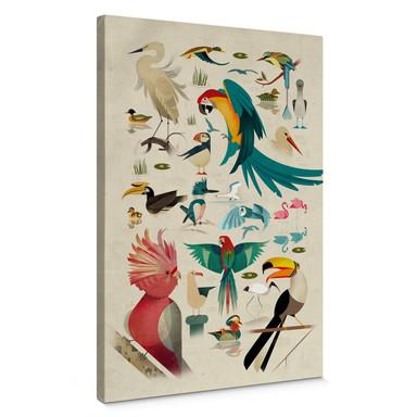 Leinwandbild Braun - Birds