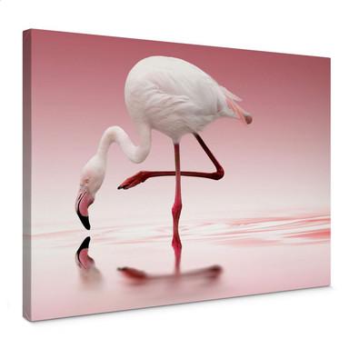 Leinwandbild Reindl - Pink Flamingo