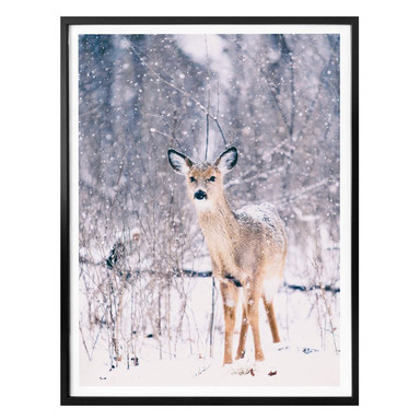 Poster Winter Fawn