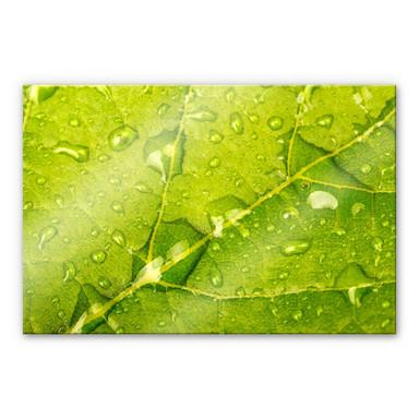 Acrylglasbild Wasserperlen