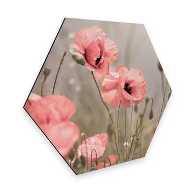 Hexagon - Alu-Dibond Delgado - Mohnblumenromantik