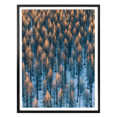Poster Bingo - Sonnenaufgang im Wald