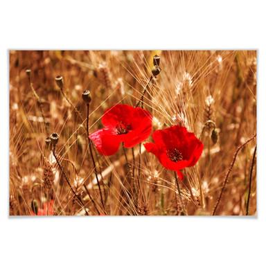 Poster Mohnblüten im Feld