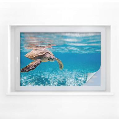 Sichtschutzfolie Schildkröte auf Reisen - Bild 1